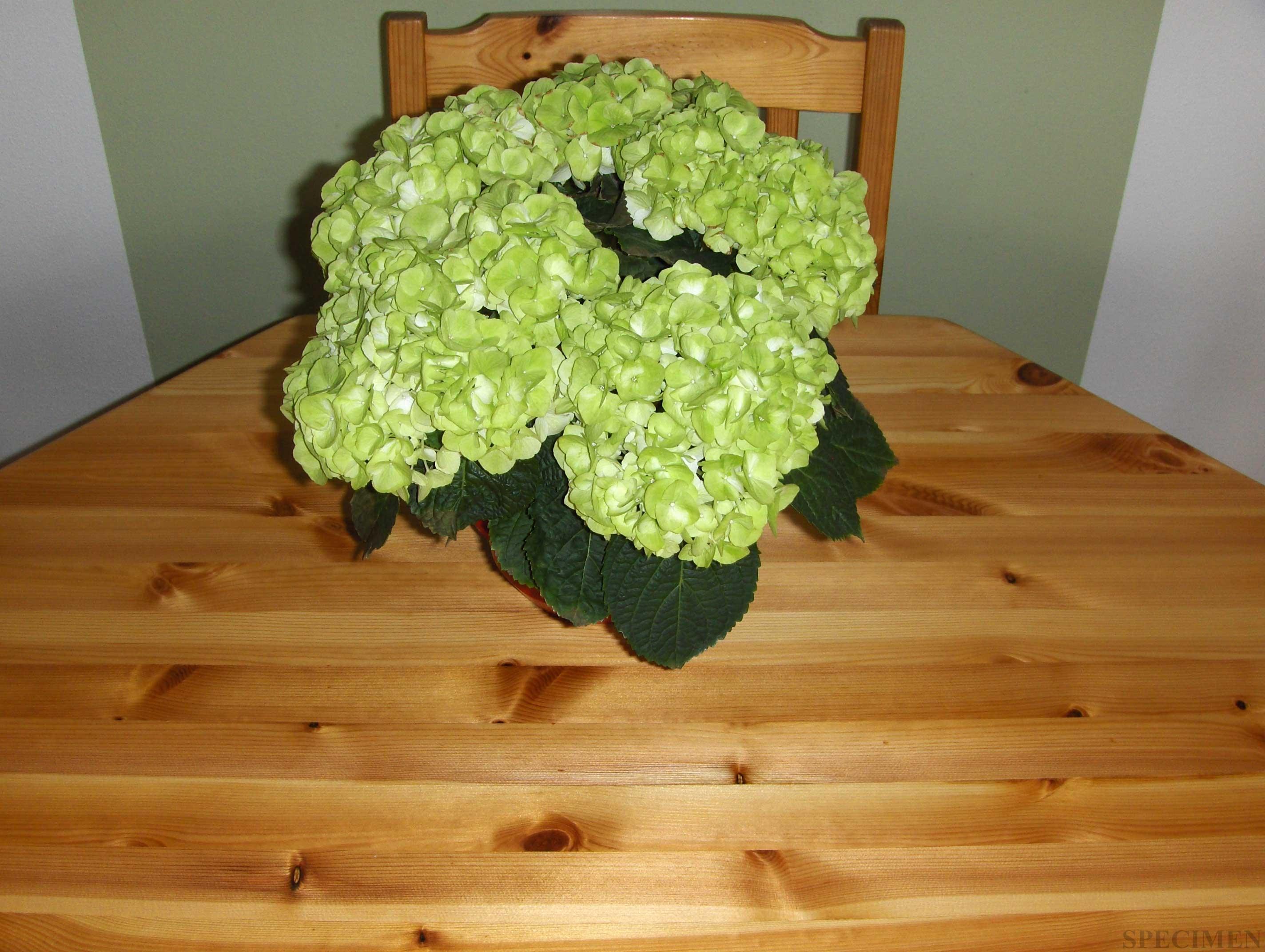 Grenen tafel opgeknapt